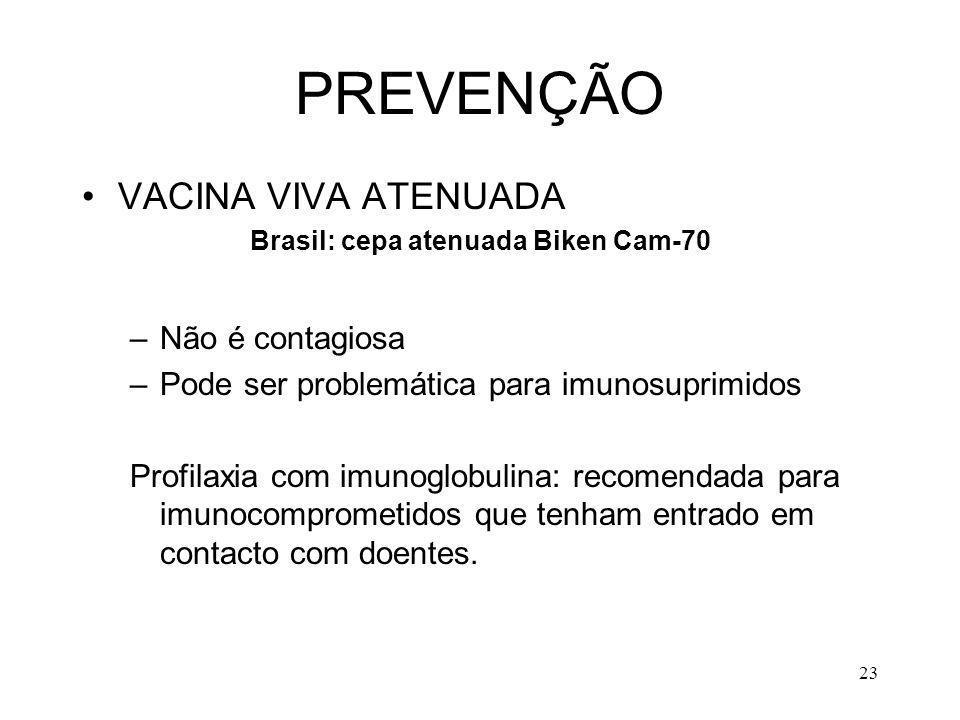 23 PREVENÇÃO VACINA VIVA ATENUADA Brasil: cepa atenuada Biken Cam-70 –Não é contagiosa –Pode ser problemática para imunosuprimidos Profilaxia com imun