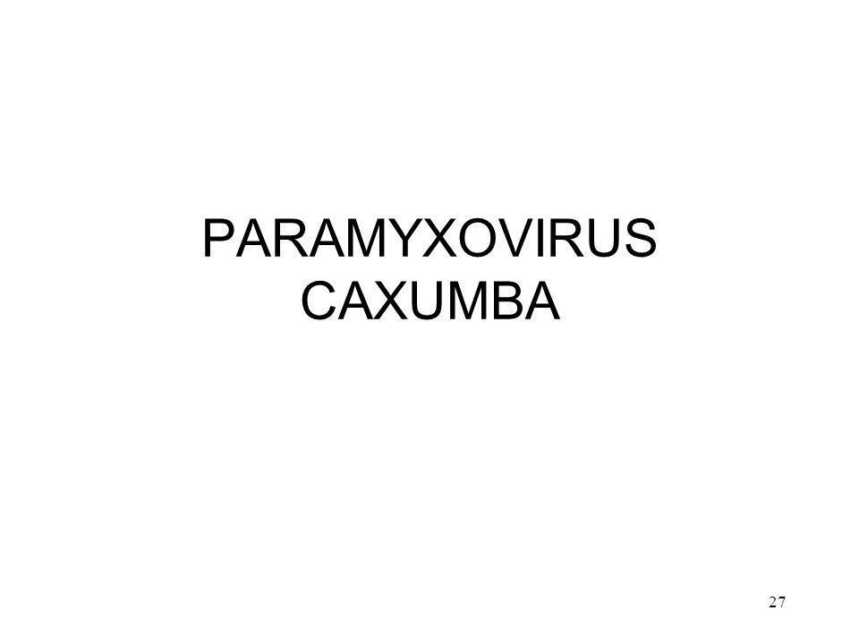 27 PARAMYXOVIRUS CAXUMBA