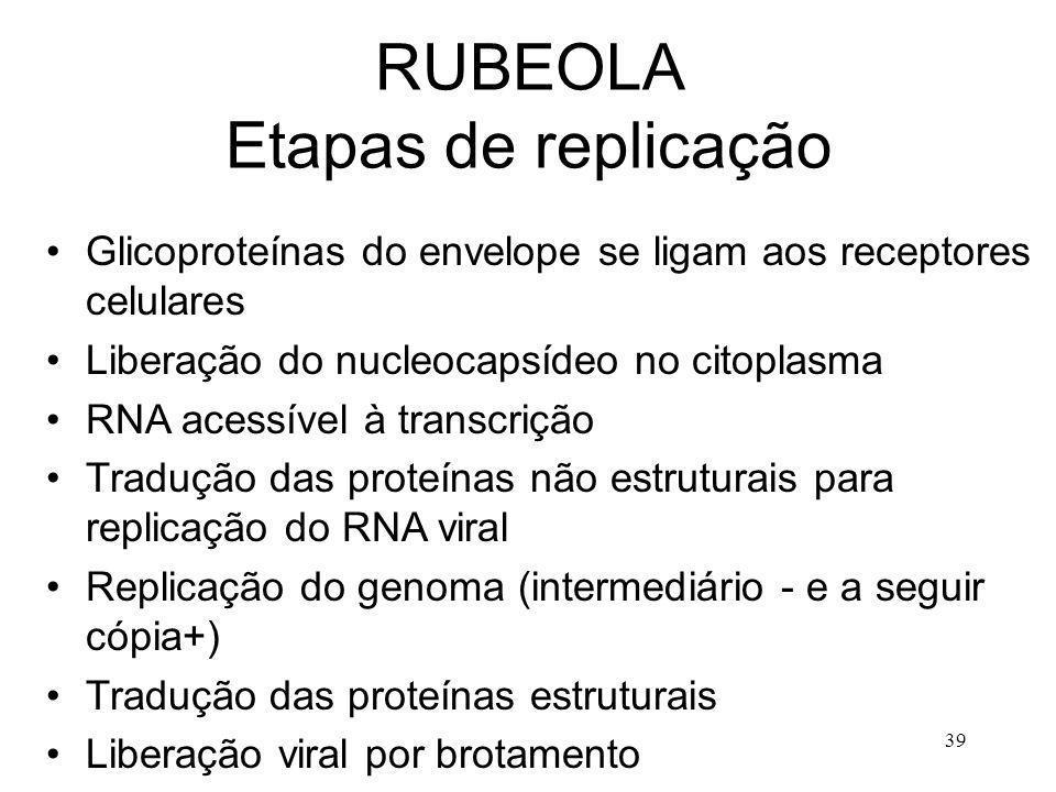 39 RUBEOLA Etapas de replicação Glicoproteínas do envelope se ligam aos receptores celulares Liberação do nucleocapsídeo no citoplasma RNA acessível à