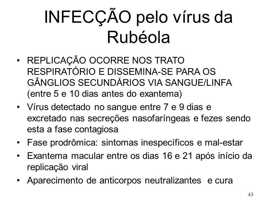 43 INFECÇÃO pelo vírus da Rubéola REPLICAÇÃO OCORRE NOS TRATO RESPIRATÓRIO E DISSEMINA-SE PARA OS GÂNGLIOS SECUNDÁRIOS VIA SANGUE/LINFA (entre 5 e 10