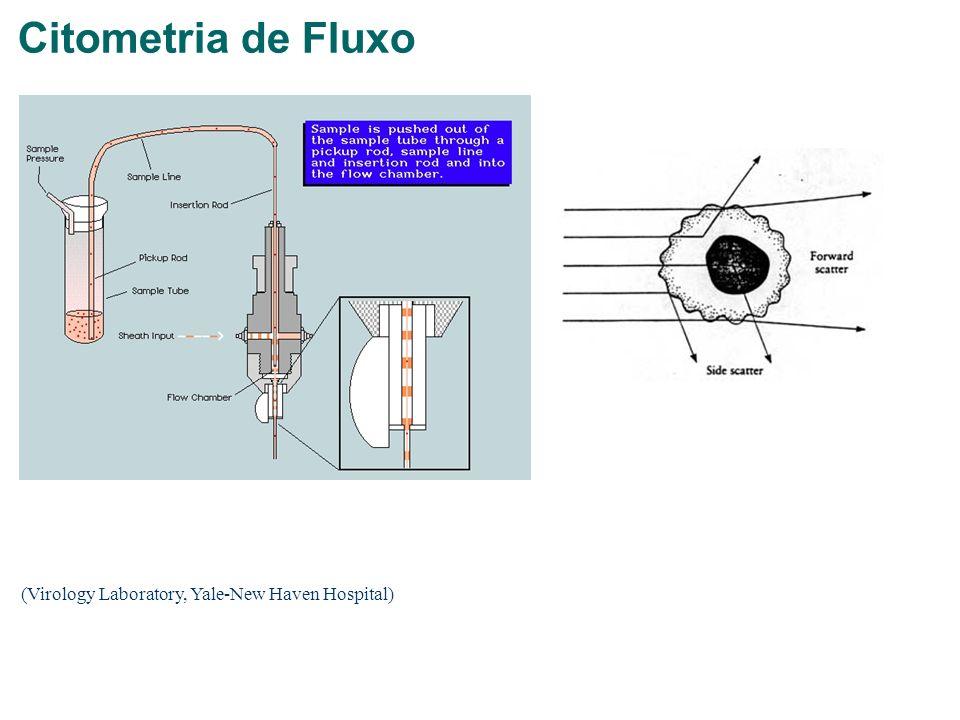Citometria de Fluxo (Virology Laboratory, Yale-New Haven Hospital)