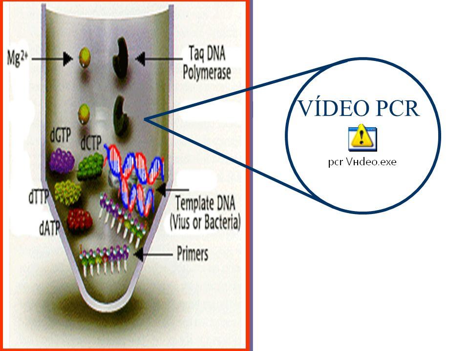 VÍDEO PCR