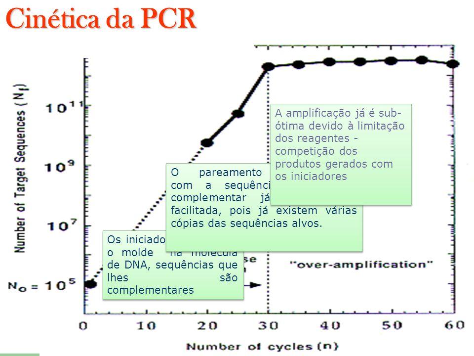 Os iniciadores procuram o molde na molécula de DNA, sequências que lhes são complementares O pareamento dos iniciadores com a sequência que lhe é comp