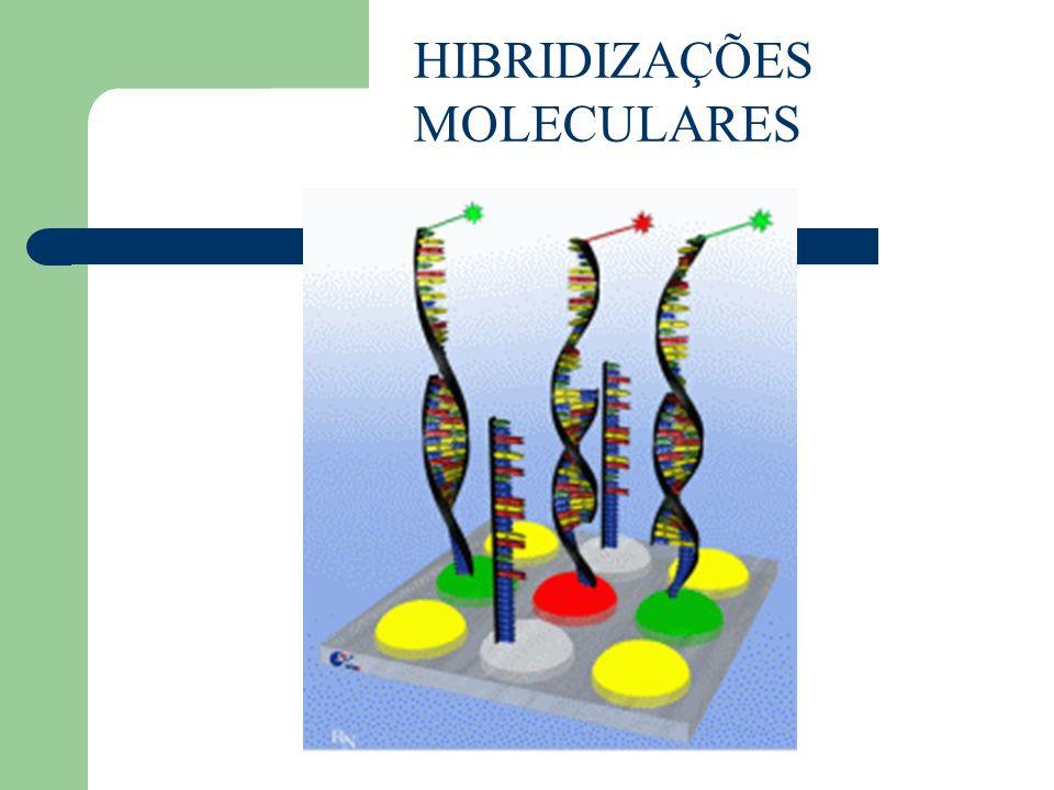 HIBRIDIZAÇÕES MOLECULARES