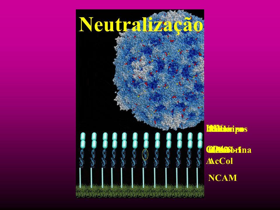 Neutralização HIV CD4 Raiva Rec AcCol NCAM Sarampo CD46 Influenza Glicoforina A EBV CR2 Rinovirus ICAM-1