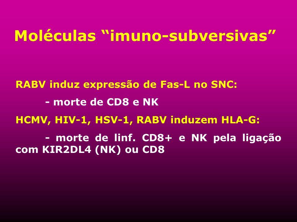 Moléculas imuno-subversivas RABV induz expressão de Fas-L no SNC: - morte de CD8 e NK HCMV, HIV-1, HSV-1, RABV induzem HLA-G: - morte de linf. CD8+ e