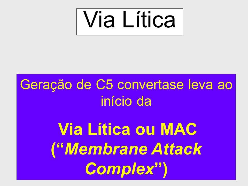 20 Via Clássica Geração de C5-convertase C4b Mg ++ C4a Ca ++ C1r C1s C1q C2a C2 b C3 C3a b C4b2b3b é C5 convertase; ele dirige o complemento para form