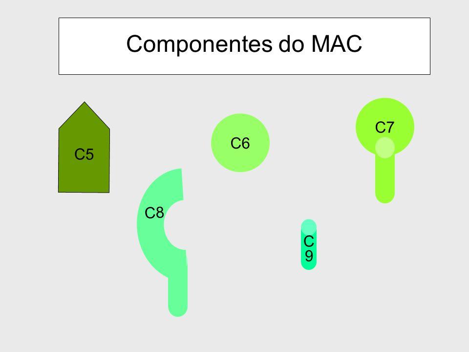 Geração de C5 convertase leva ao início da Via Lítica ou MAC (Membrane Attack Complex) Via Lítica