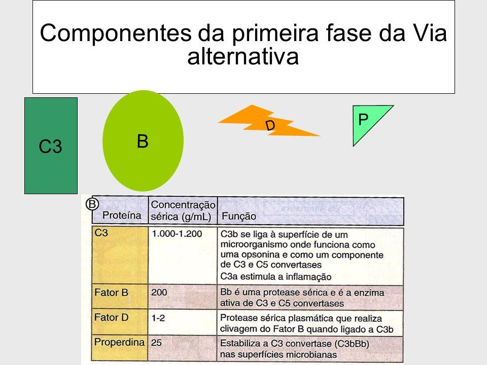 40 Componentes da Via Alternativa do Complemento Fator B = B Fator D = D Properdina = P C3, C5, C6, C7, C8, C9