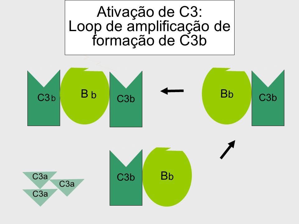 B D BbBb C3b C3 b Ativação de C3: Loop de amplificação de formação de C3b C3b C3a b