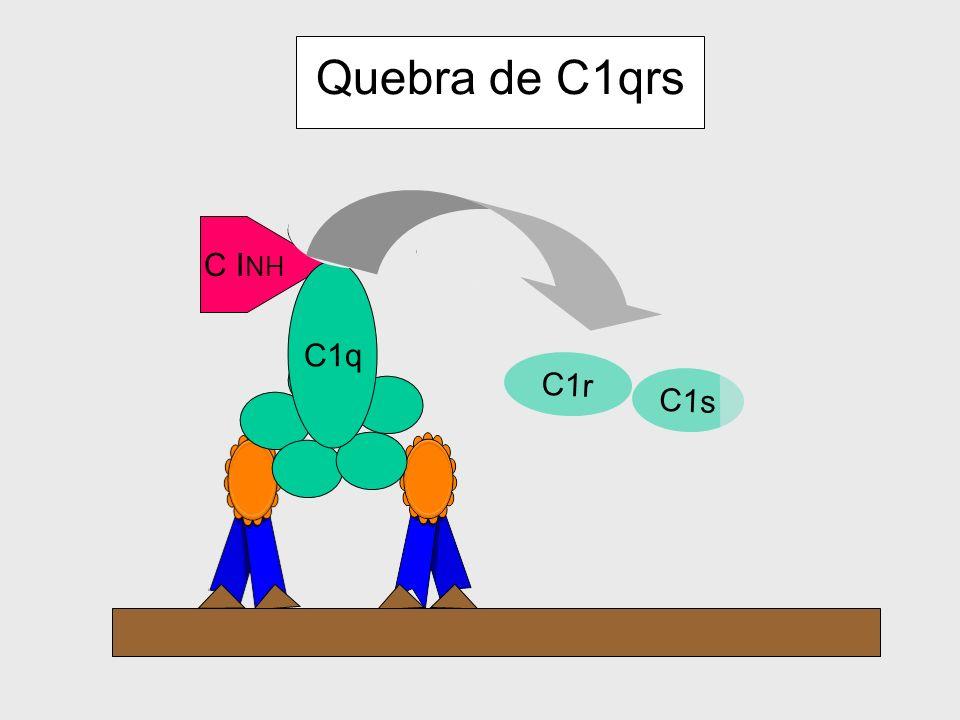 58 SISTEMA COMPLEMENTO CONTROLE DA ATIVAÇÃO As células dos mamíferos, em condições normais, expressam proteínas reguladoras que inibem a ativação do c