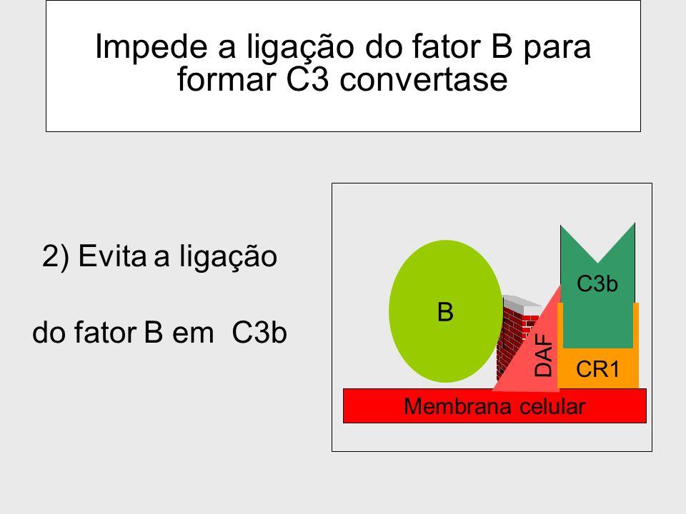 Dissociação das subunidades de C3 convertase via DAF (decay acceleration factor) Ações do DAF 1) desloca o C3b- ligado ao fator Bb ( impede a formação