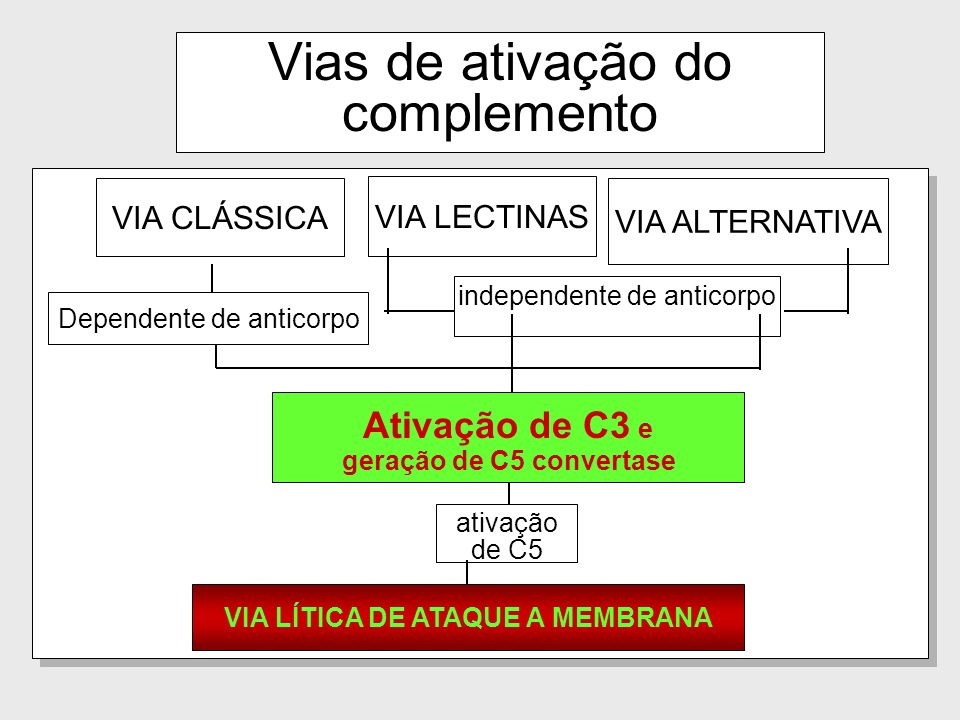 65 CD59: Impede a formação de MAC pois inibe a ligação de C9