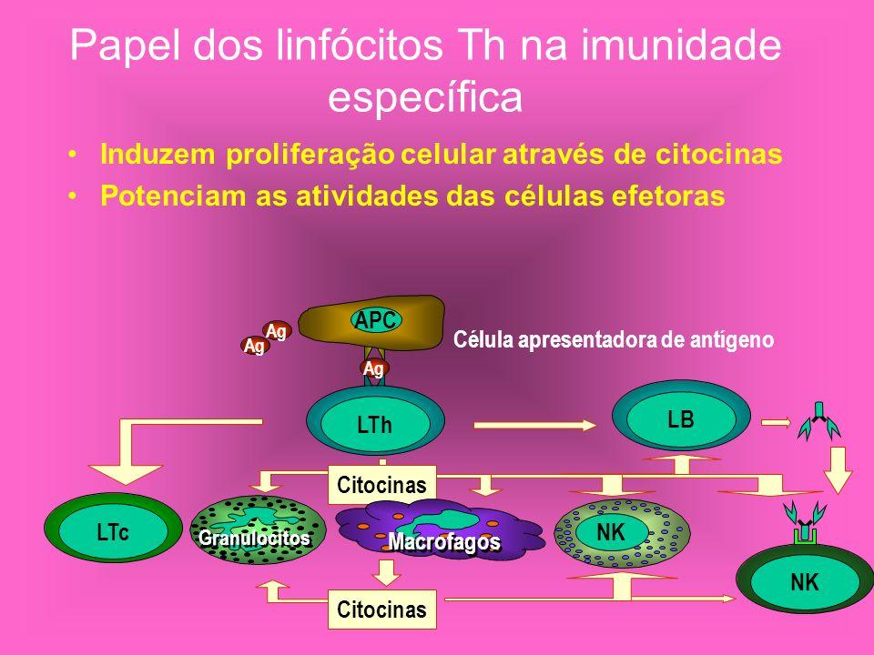 Papel dos linfócitos Th na imunidade específica Induzem proliferação celular através de citocinas Potenciam as atividades das células efetoras APC LTh