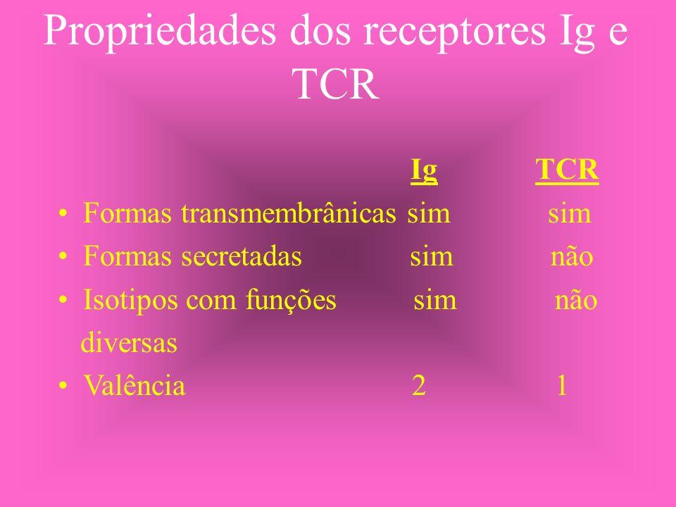 Propriedades dos receptores Ig e TCR Ig TCR Formas transmembrânicas sim sim Formas secretadas sim não Isotipos com funções sim não diversas Valência 2