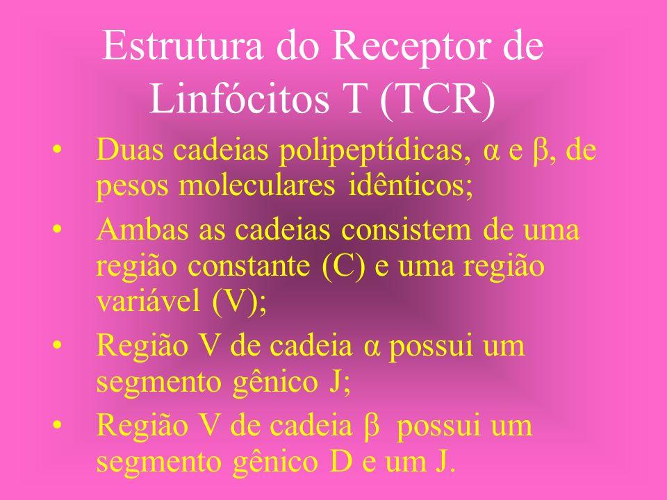 Estrutura do Receptor de Linfócitos T (TCR) Duas cadeias polipeptídicas, α e β, de pesos moleculares idênticos; Ambas as cadeias consistem de uma regi