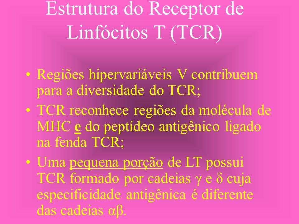 Estrutura do Receptor de Linfócitos T (TCR) Regiões hipervariáveis V contribuem para a diversidade do TCR; TCR reconhece regiões da molécula de MHC e