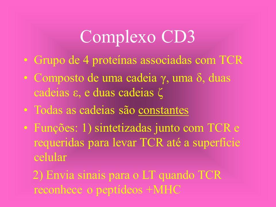 Complexo CD3 Grupo de 4 proteínas associadas com TCR Composto de uma cadeia γ, uma δ, duas cadeias ε, e duas cadeias ζ Todas as cadeias são constantes