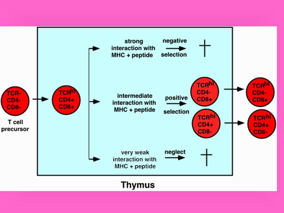 Funcões das células Th1 e Th2