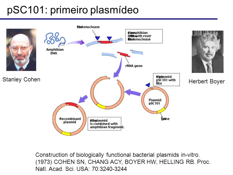 pSC101: primeiro plasmídeo Stanley Cohen Herbert Boyer Construction of biologically functional bacterial plasmids in-vitro. (1973) COHEN SN, CHANG ACY