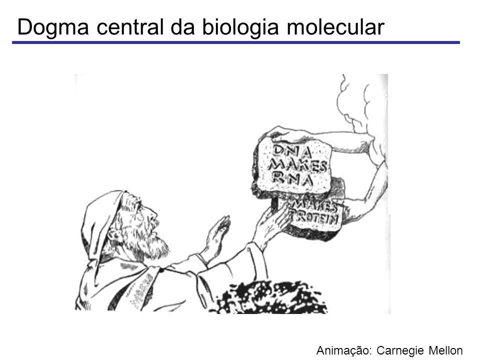 Dogma central da biologia molecular DNA: Armazena informação RNA: intermediário da informação do DNA Proteína: Realiza as tarefas das células