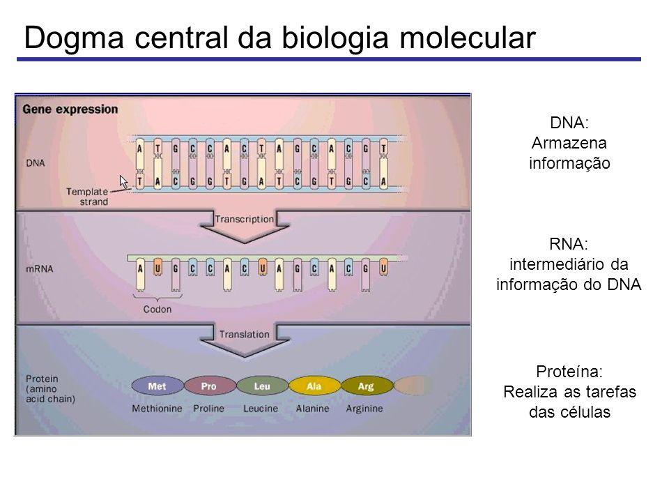 Plaqueamento de uma biblioteca de cDNA