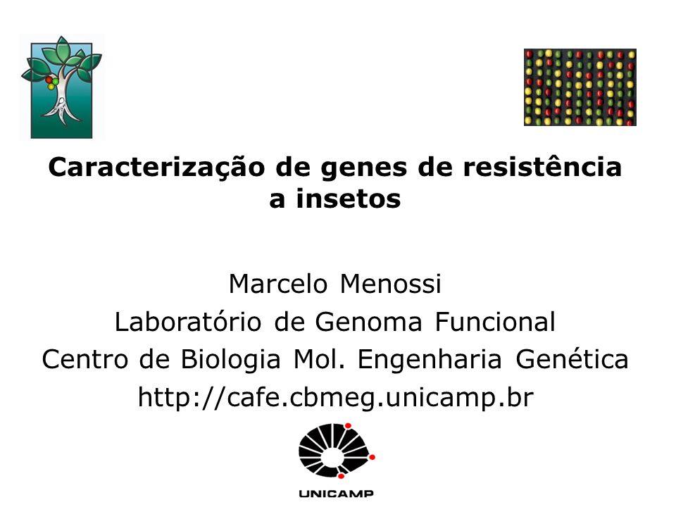 Caracterização de genes de resistência a insetos Marcelo Menossi Laboratório de Genoma Funcional Centro de Biologia Mol. Engenharia Genética http://ca