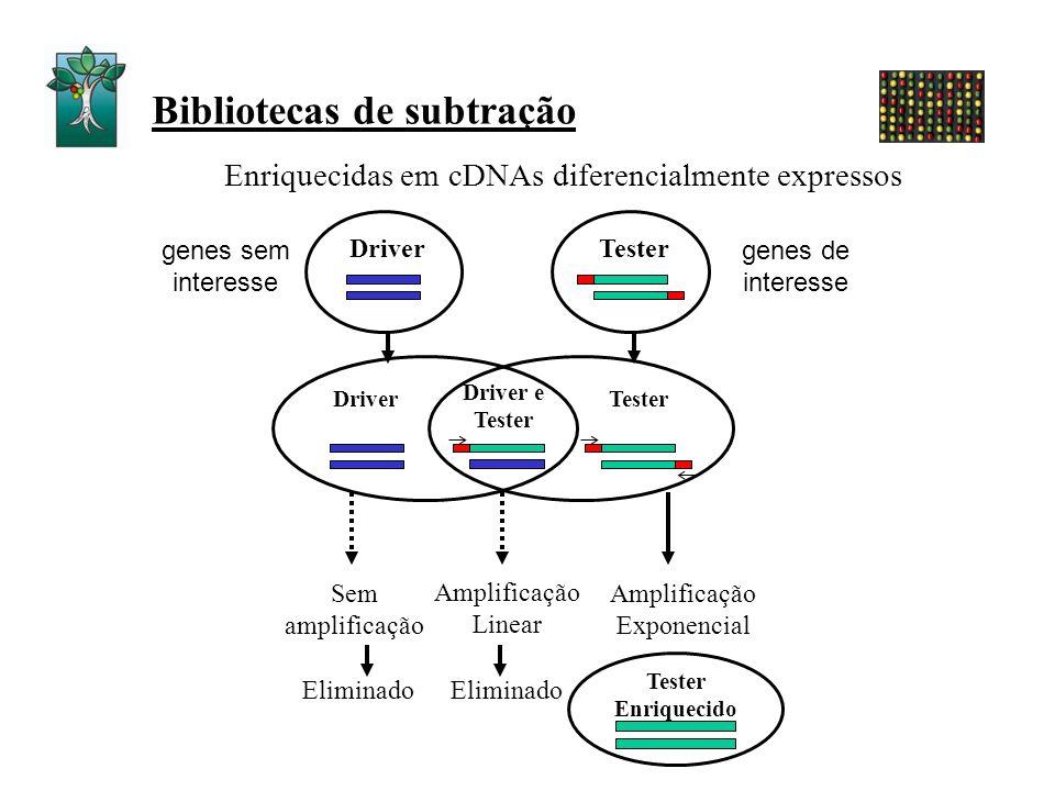 Bibliotecas de subtração Enriquecidas em cDNAs diferencialmente expressos DriverTester Sem amplificação Amplificação Exponencial Amplificação Linear E