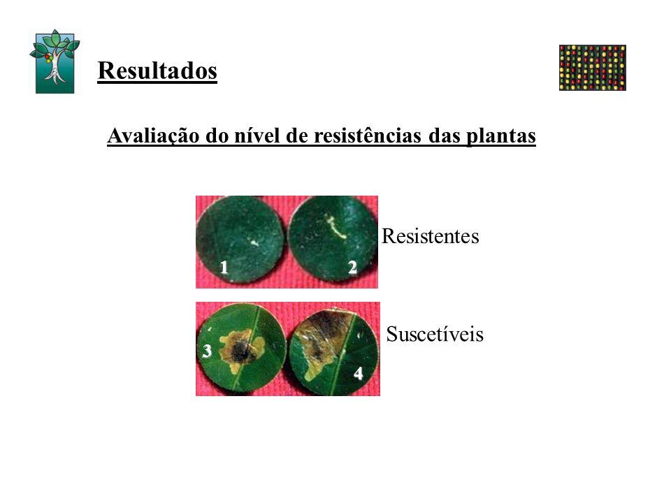 Resultados Avaliação do nível de resistências das plantas 12 3 4 Resistentes Suscetíveis