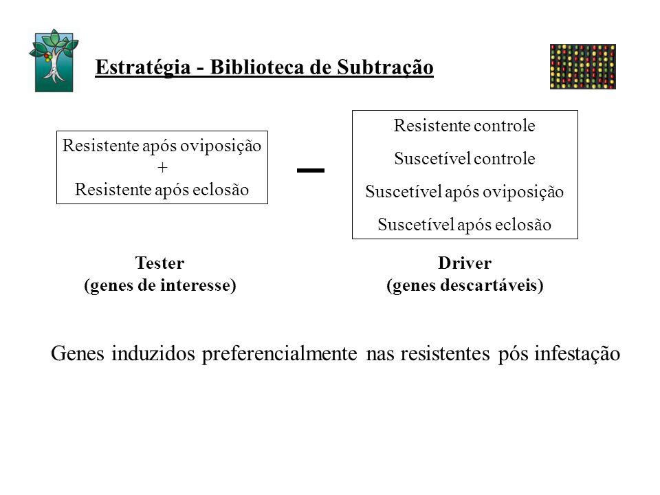 Estratégia - Biblioteca de Subtração Tester (genes de interesse) Driver (genes descartáveis) Genes induzidos preferencialmente nas resistentes pós inf
