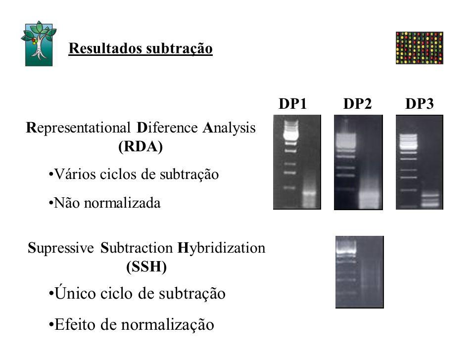 Resultados subtração DP1DP2DP3 Vários ciclos de subtração Não normalizada Único ciclo de subtração Efeito de normalização Representational Diference A
