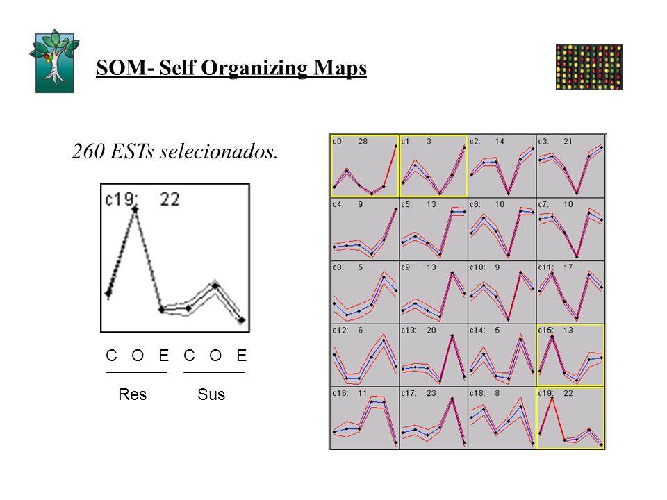 SOM- Self Organizing Maps 260 ESTs selecionados. C O E ResSus
