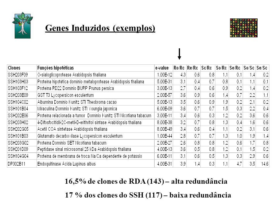 Genes Induzidos (exemplos) 16,5% de clones de RDA (143) – alta redundância 17 % dos clones do SSH (117) – baixa redundância
