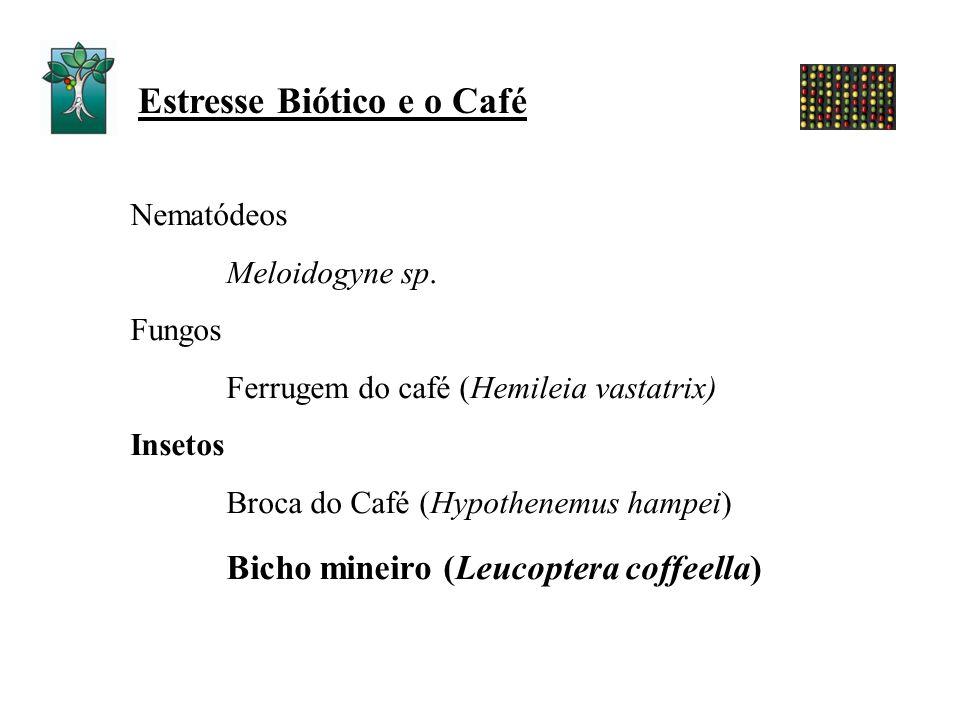 Nematódeos Meloidogyne sp. Fungos Ferrugem do café (Hemileia vastatrix) Insetos Broca do Café (Hypothenemus hampei) Bicho mineiro (Leucoptera coffeell