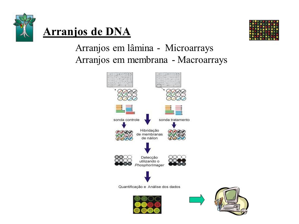 Arranjos de DNA Arranjos em lâmina - Microarrays Arranjos em membrana - Macroarrays