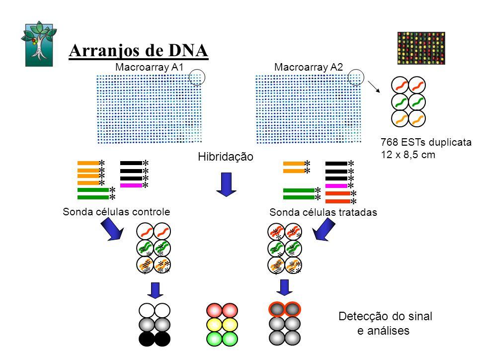 Arranjos de DNA * * * * * * * * * * * * * * * * * ** * * * * * * * * * * ** * * * * * Sonda células controle Sonda células tratadas * * * * * * * * *