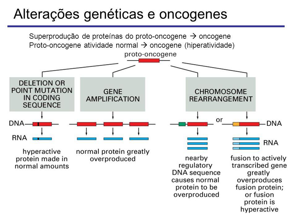Alterações genéticas e oncogenes Superprodução de proteínas do proto-oncogene oncogene Proto-oncogene atividade normal oncogene (hiperatividade)