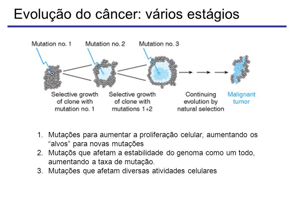Evolução do câncer: vários estágios 1.Mutações para aumentar a proliferação celular, aumentando os alvos para novas mutações 2.Mutaçõs que afetam a estabilidade do genoma como um todo, aumentando a taxa de mutação.