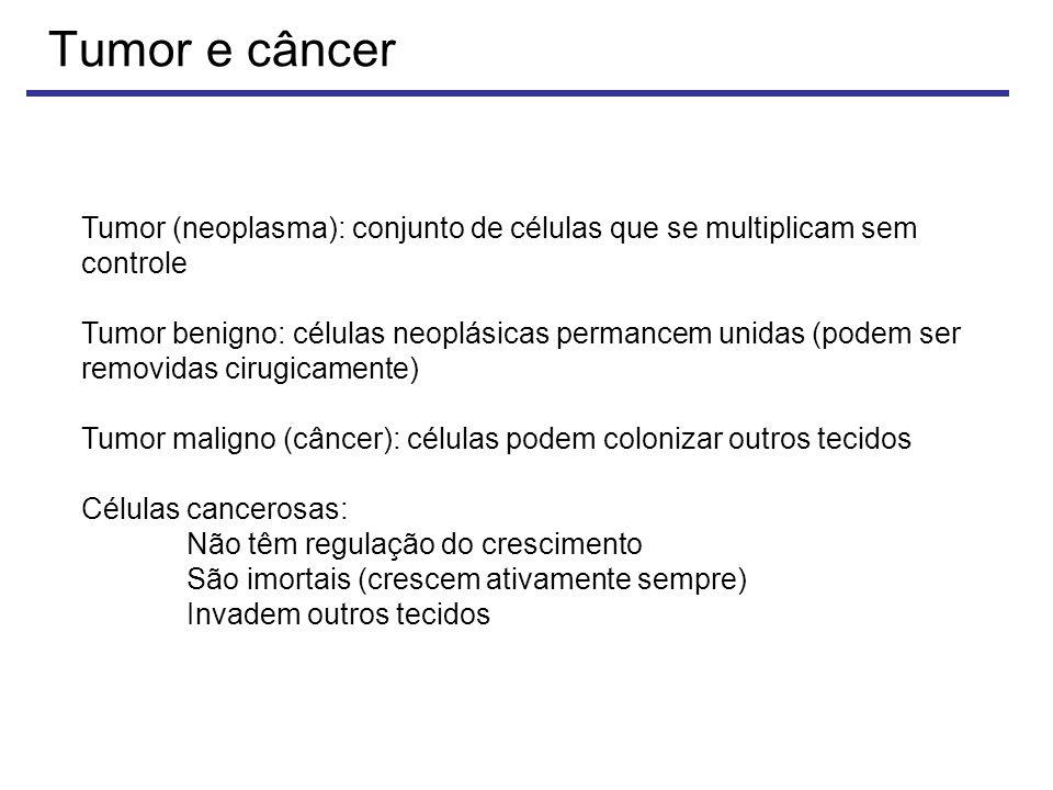 Tumor e câncer Tumor (neoplasma): conjunto de células que se multiplicam sem controle Tumor benigno: células neoplásicas permancem unidas (podem ser removidas cirugicamente) Tumor maligno (câncer): células podem colonizar outros tecidos Células cancerosas: Não têm regulação do crescimento São imortais (crescem ativamente sempre) Invadem outros tecidos