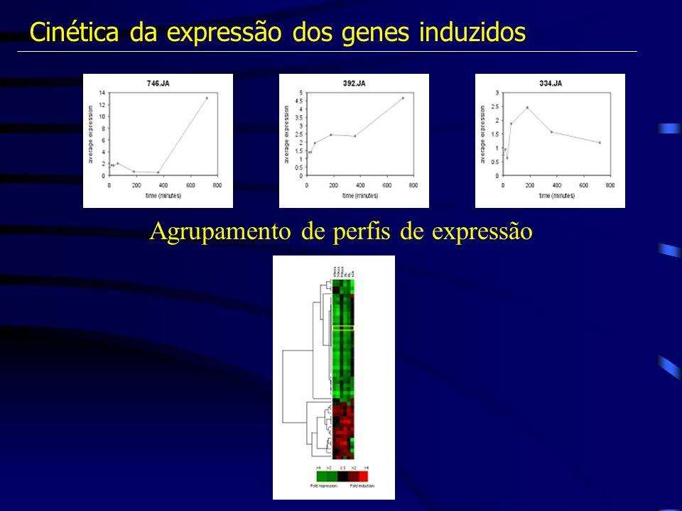 Cinética da expressão dos genes induzidos Agrupamento de perfis de expressão