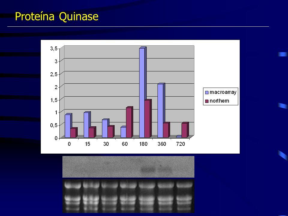 Proteína Quinase