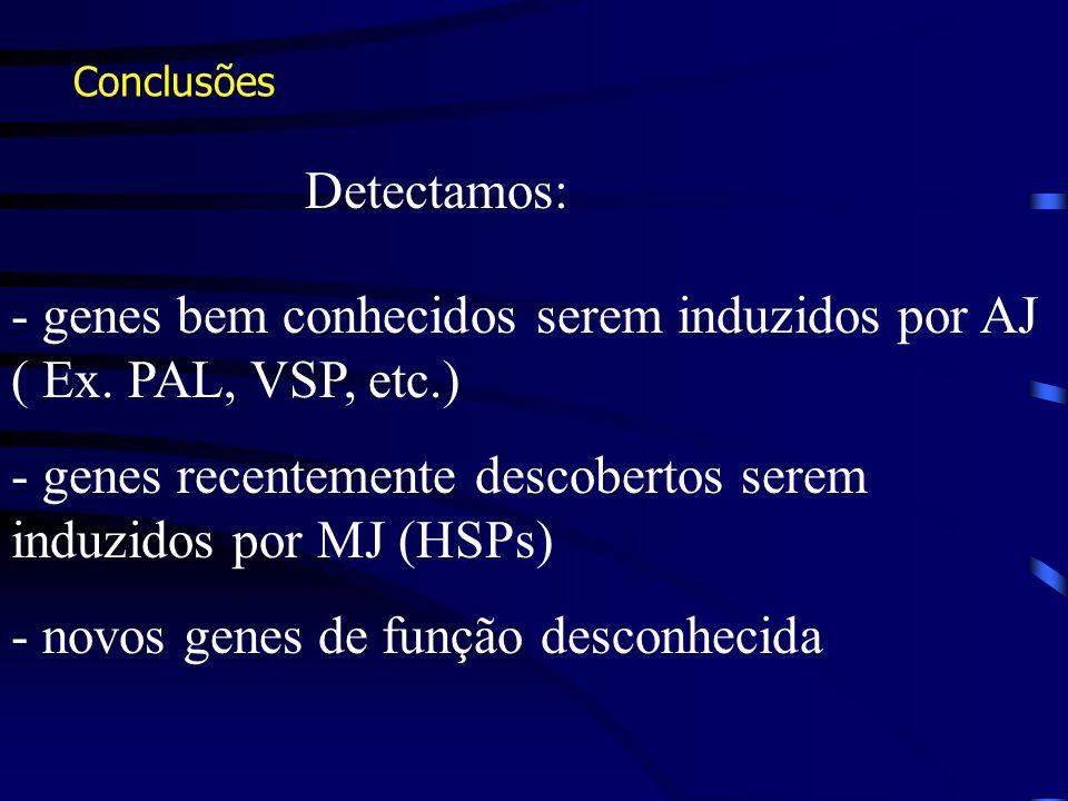 Conclusões - genes bem conhecidos serem induzidos por AJ ( Ex. PAL, VSP, etc.) - genes recentemente descobertos serem induzidos por MJ (HSPs) - novos