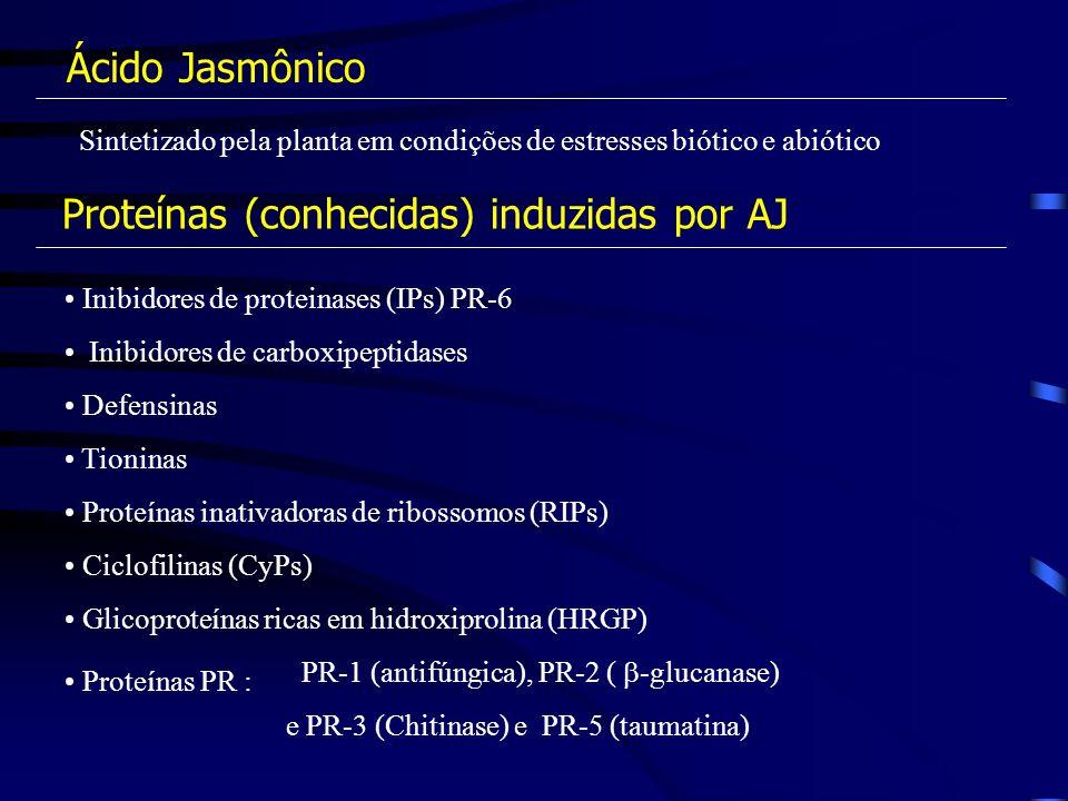 Inibidores de proteinases (IPs) PR-6 Inibidores de carboxipeptidases Defensinas Tioninas Proteínas inativadoras de ribossomos (RIPs) Ciclofilinas (CyP