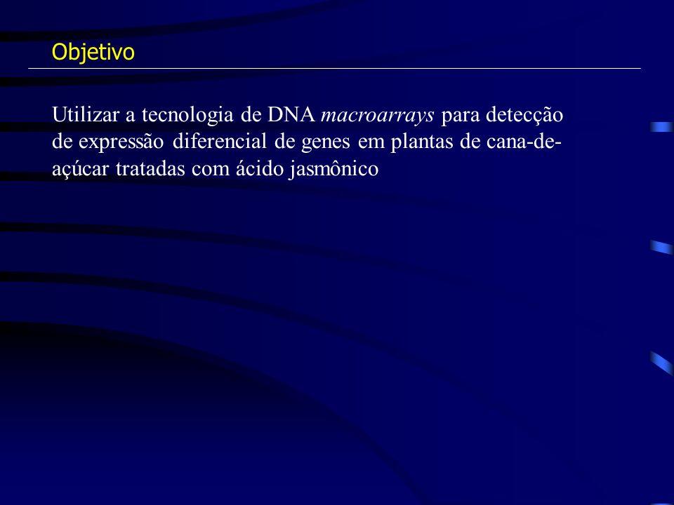 Utilizar a tecnologia de DNA macroarrays para detecção de expressão diferencial de genes em plantas de cana-de- açúcar tratadas com ácido jasmônico Ob