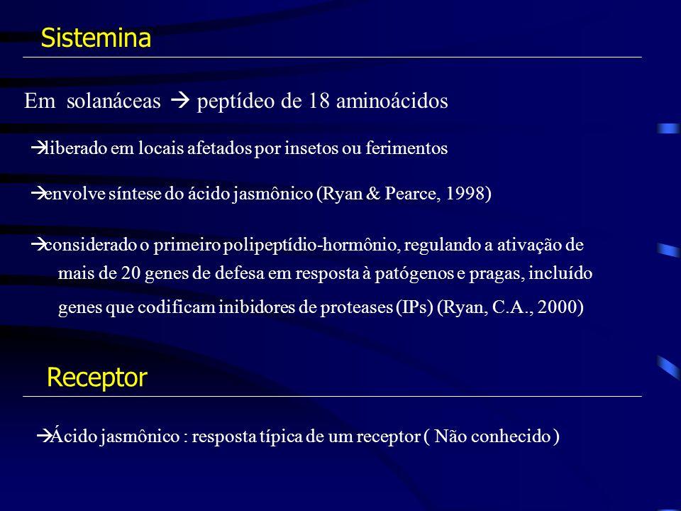 Em solanáceas peptídeo de 18 aminoácidos liberado em locais afetados por insetos ou ferimentos envolve síntese do ácido jasmônico (Ryan & Pearce, 1998