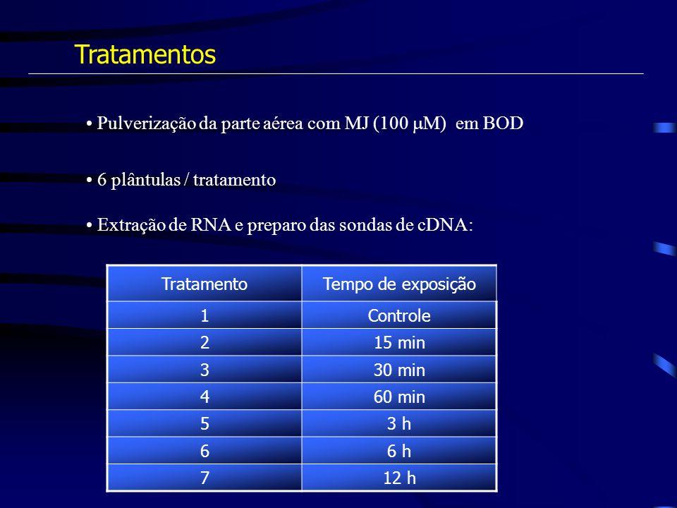 Tratamentos Pulverização da parte aérea com MJ (100 M) em BOD 6 plântulas / tratamento Extração de RNA e preparo das sondas de cDNA: TratamentoTempo d
