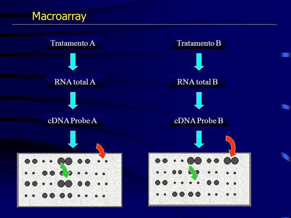 Macroarray Tratamento A RNA total A cDNA Probe A Tratamento B RNA total B cDNA Probe B