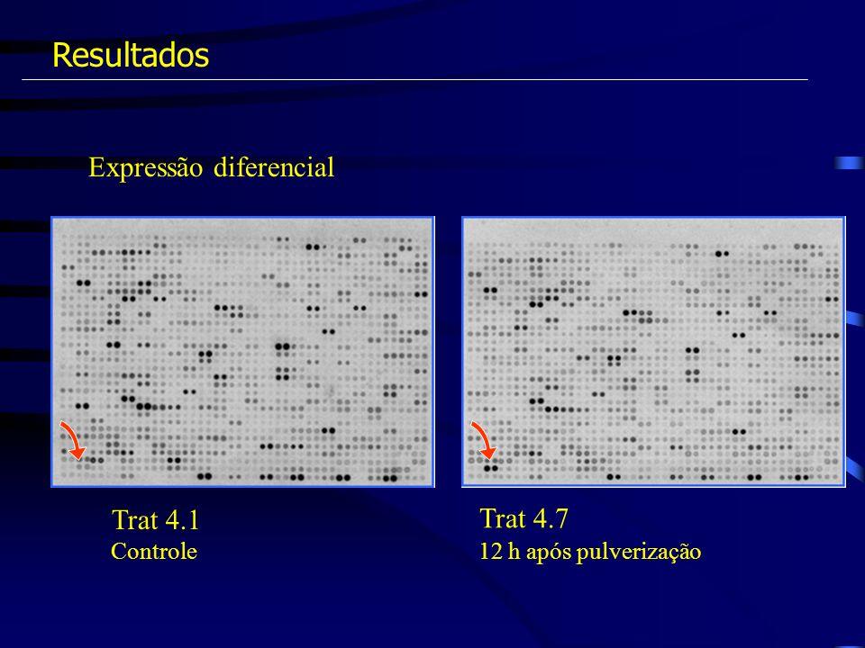 Expressão diferencial Resultados Trat 4.7 Trat 4.1 12 h após pulverizaçãoControle