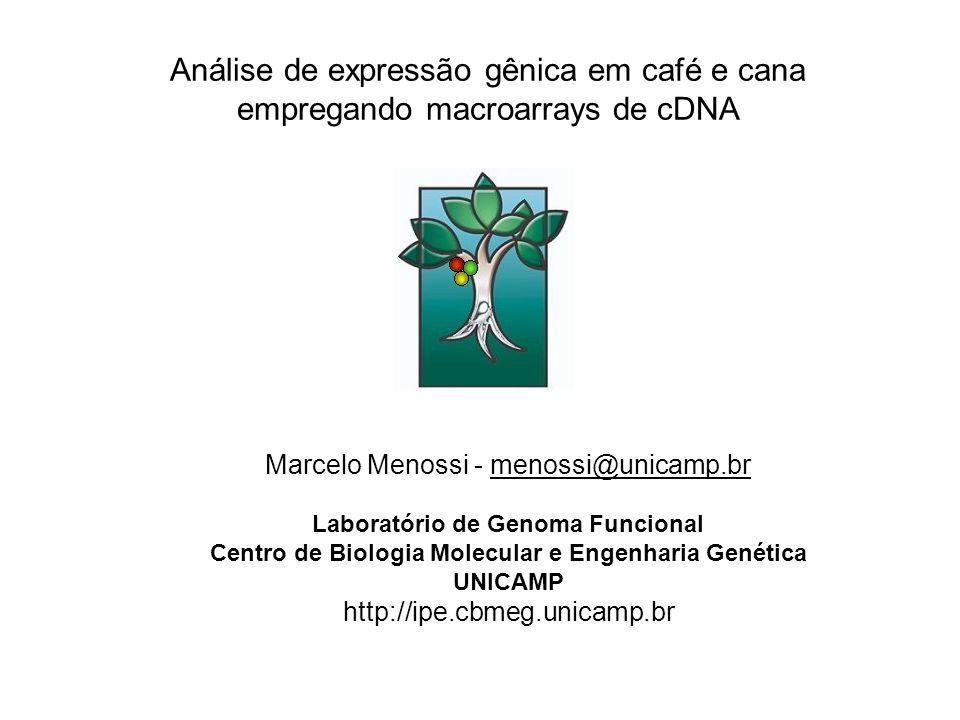 Análise de expressão gênica em café e cana empregando macroarrays de cDNA Marcelo Menossi - menossi@unicamp.br Laboratório de Genoma Funcional Centro de Biologia Molecular e Engenharia Genética UNICAMP http://ipe.cbmeg.unicamp.brmenossi@unicamp.br