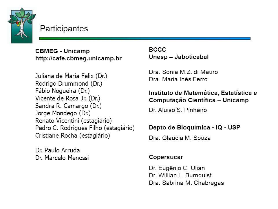 CBMEG - Unicamp http://cafe.cbmeg.unicamp.br Juliana de Maria Felix (Dr.) Rodrigo Drummond (Dr.) Fábio Nogueira (Dr.) Vicente de Rosa Jr. (Dr.) Sandra